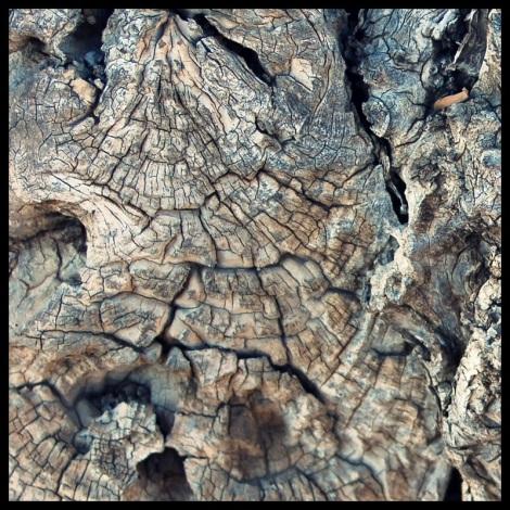 arbol-tronco