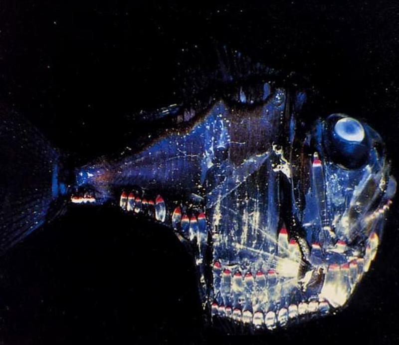 pez-hacha-de-plata