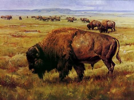 bisontes1