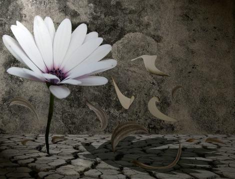 roumec-flor